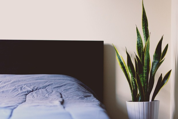 Your Guide to Surviving Bedbugs in Bushwick