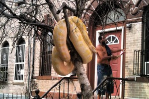 Encounter with a Yellow Snake (aka 5 Events for This Weekend)