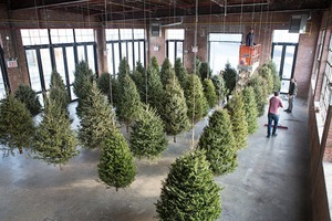 Where Christmas Trees Go to Live: Check Out This Amazing Installation at Knockdown Center