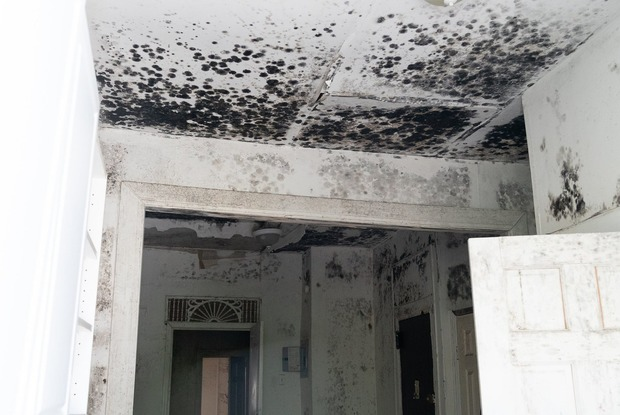 Life-Threatening Mold Brings Bushwick Tenants to File Lawsuit Against Landlords