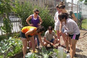 This Bushwick Program Could Turn You Into An Urban Farmer. Apply Now!