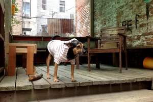 Corey, the Bed-Stuy Pooch Found a Home!
