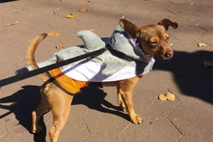 Costumed Pups Will Return to Irving Square Park for the Third Annual Howl-A-Ween
