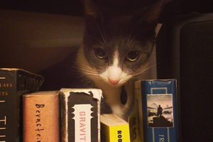 Bushwick Pet of The Week: Cat Basketball Likes to Read Too