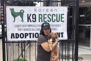 Local Dog Rescue Looks To End Korean Dog Meat Trade