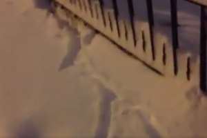 Watch These Bushwick Rats Frolic in the Fresh Snow [Video]