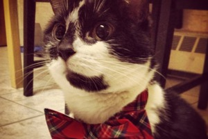 Pet of the Week: Gobo is One Cool Cat