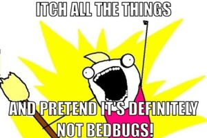 The Many Horrifying Stages of Bedbug Grief (And How to Get Through Them)