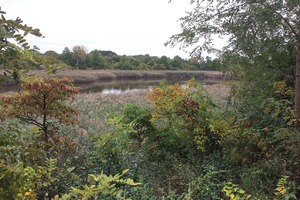 Ridgewood Reservoir Gets Protective Status After Years of Activism