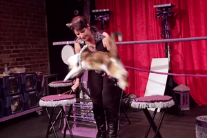 The Cutest Thing Ever: Cat Circus is Performing in Bushwick Thursday Through Sunday