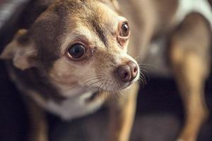 Dr. Loose is a Hero of Bushwick Pets