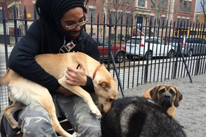 Meet Bushwick's Dog Whisperer, Daniel Nogueira of Bushwick K9