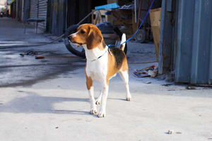 A Very Serious Data Project Determined Bushwick's Signature Dog Name