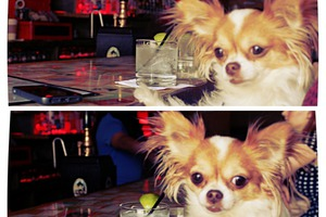 Dog Dayz Ain't Over: A Day in the Life of a Bushwick Pooch