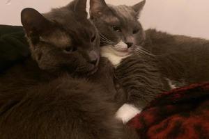 Heart-Melter: 7 Fantastic Pet Rescue Stories From Bushwick