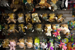 Party For Your Pet: Another Pet Store Opens in Bushwick