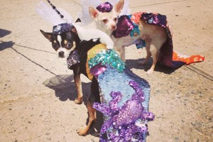 So How Was the Mermaid Parade? Here's Some Photos