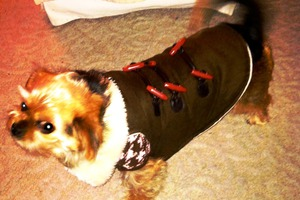 Pet of the Week: Meet Madison the Shorkie!
