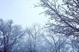 Blizzard Stella Spits Snow, Sleet, and Wind All Over Bushwick