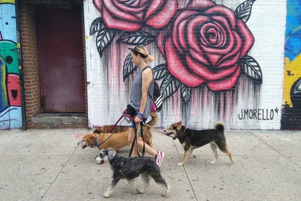How to Make It as a Professional Dog Walker in Bushwick