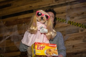 Photos: Behold the Costumed Canine Cuties of Bushwick Bark's Annual Halloween Party!